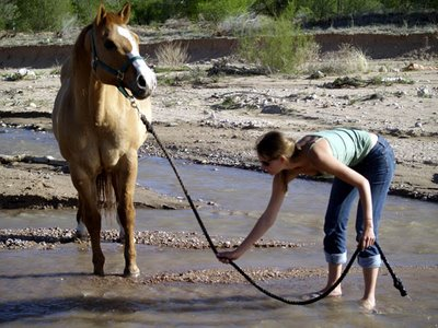 You Can Lead A Horse To Water But You Cannot Make Him Drink The